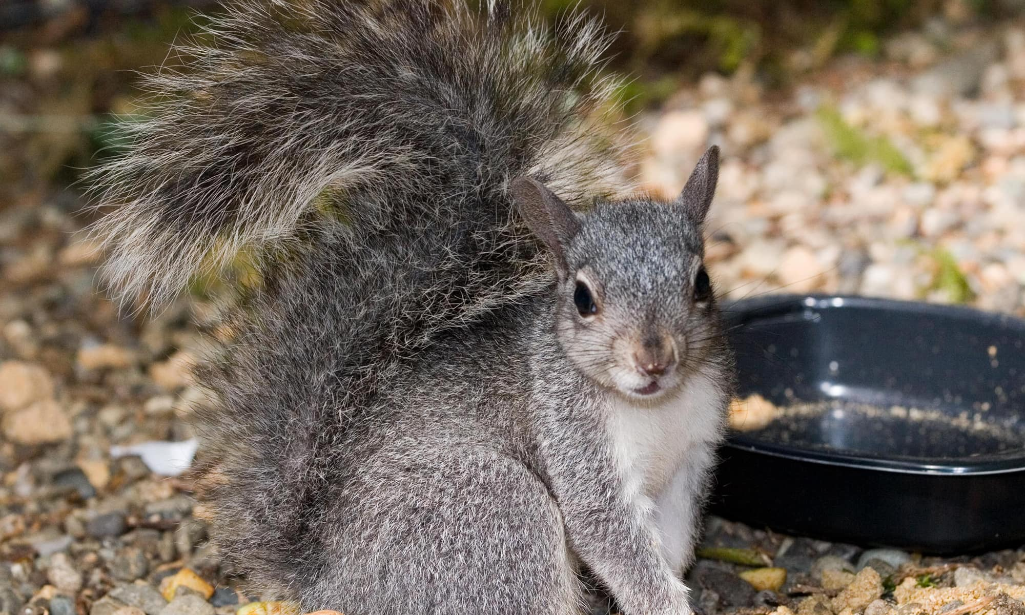 Squirrels and Chipmunks | PAWS on deer eat, penguins eat, cows eat, tigers eat, snakes eat, spiders eat, seals eat, squirrels eat, mice eat, rodents eat,